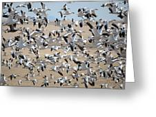 Migrating Snow Geese Greeting Card