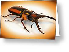 Military Stag Beetle Greeting Card