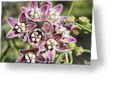 Milk Weed Vine Flowers Greeting Card