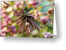 Milkweed 3 Greeting Card