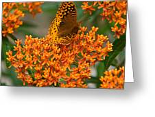 Milkweed And A Frittalary Greeting Card