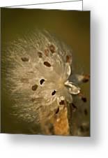 Milkweed Blast Greeting Card