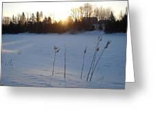 Milkweed In February At Sunrise Greeting Card