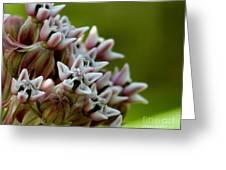Milkweed Pink Greeting Card
