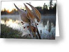 Milkweed Pods Seeds Greeting Card