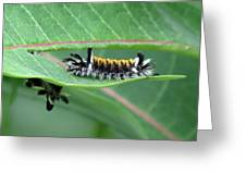 Milkweed Tussock Moth Caterpillar Greeting Card