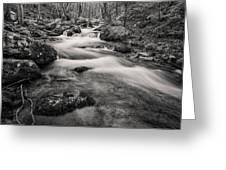 Mill Creek Monochrome Greeting Card