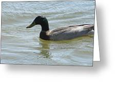 Millenia Duck Greeting Card