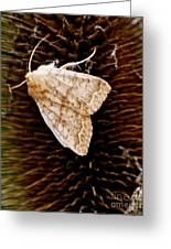 Miller Moth Greeting Card