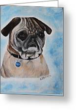 Millie The Pug 2016 Greeting Card
