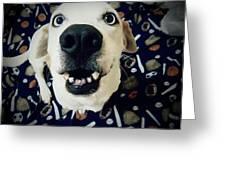 Milo The Basset Greeting Card