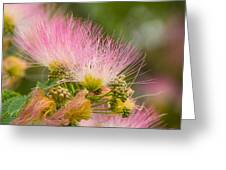 Mimosa Flower Greeting Card