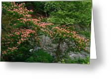 Mimosa On The Dan River Greeting Card
