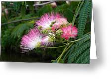 Mimosa On The Lake Greeting Card