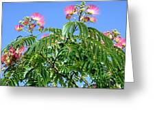 Mimosas In The Sky Greeting Card