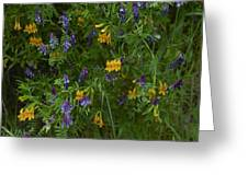 Mimulus And Vetch Greeting Card