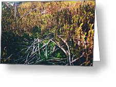 Mini-forest Greeting Card
