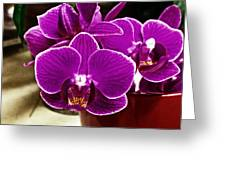 Mini Orchids Greeting Card