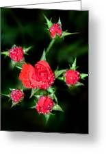 Mini Roses Greeting Card