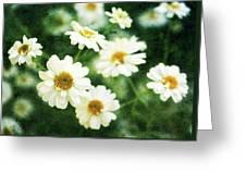 Mini Spring Daisy's Greeting Card