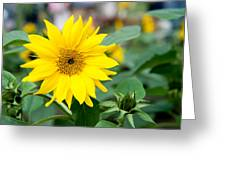 Mini Sunflower And Bud Greeting Card