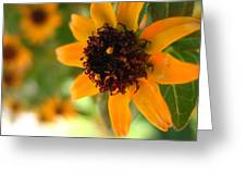 Mini Sunflower Greeting Card