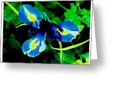 Miniature Blue Iris Greeting Card