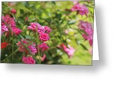 Miniature Fuchsia Roses Greeting Card