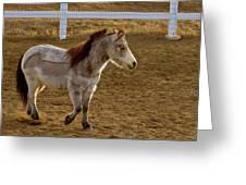 Miniature Horse Greeting Card