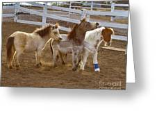 Miniature Horses Greeting Card