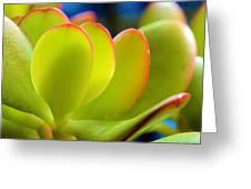 Miniature Jade Leaves Greeting Card