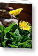 Miniature Yellow Gerbera Daisies Greeting Card