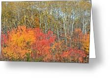 Minnesota Autumn 55 Greeting Card
