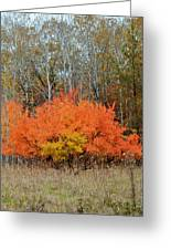 Minnesota Autumn 57 Greeting Card