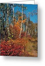 Minnesota  Autumn Path Greeting Card