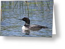 Minnesota State Bird Greeting Card