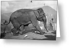 Minnie The Elephant, 1920s Greeting Card