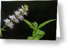 Mint Flower Greeting Card