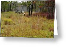 Miracle In The Meadow Greeting Card