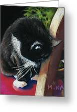 Kitty Chair Greeting Card