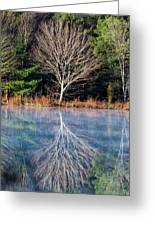 Mirror Mirror On The Pond Greeting Card