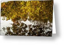 Mirrored Tree Greeting Card