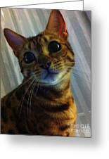 Mischievous Bengal Cat Greeting Card