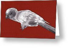 Mischievous Bird Greeting Card