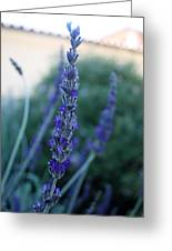 Mission Lavender Greeting Card