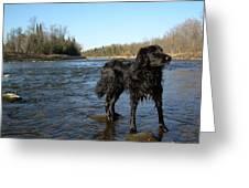 Mississippi River Dog On The Rocks Greeting Card
