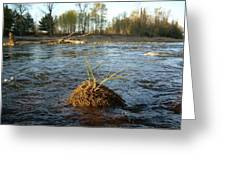 Mississippi River Grass On A Rock Greeting Card