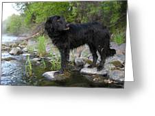 Mississippi River Posing Dog Greeting Card