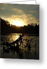 Mississippi River Sunrise Tree Roots Greeting Card