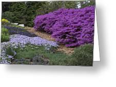 Missouri Botanical Garden Purple Azaleas Dsc01692 Greeting Card